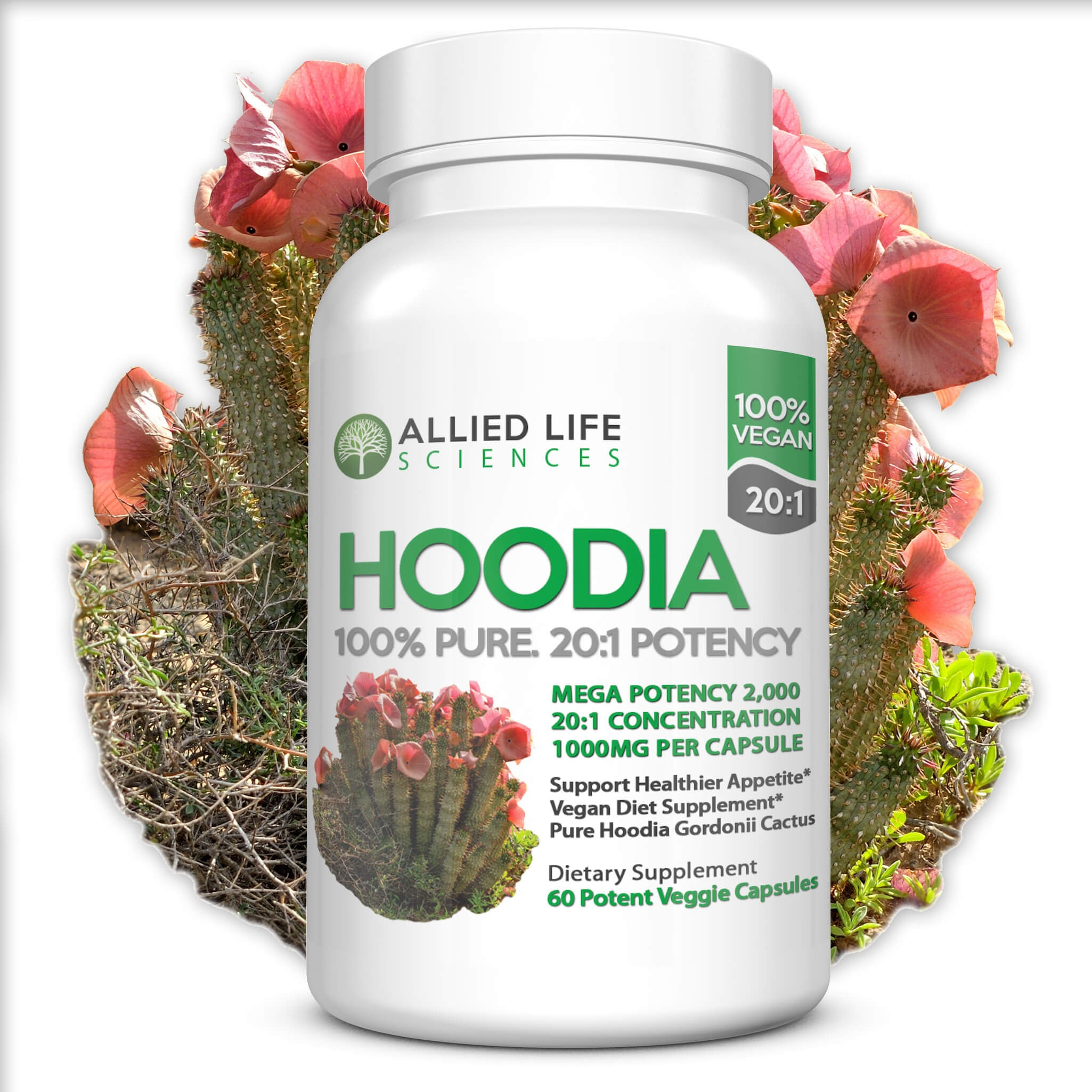 Hoodia Gordonii Life Miracle Natural Health And Ecological